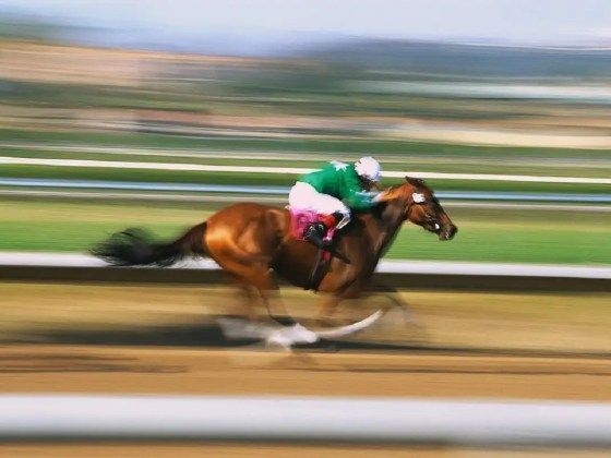 How fast do racehorses run