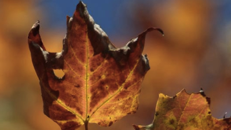Image result for withering leaves