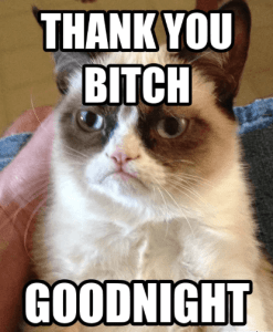 cat thank you meme