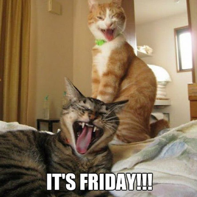 happy friday cat picture