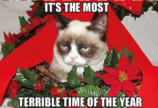 grumpy terrible time cat memes