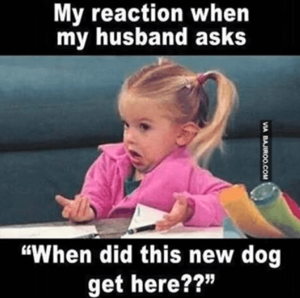 i love you dog meme funny