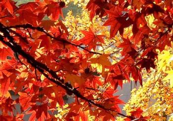 Ce invatam de la frunze?