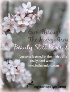 Beauty Still Blooms