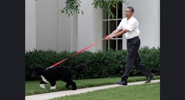 Obama man and his dog
