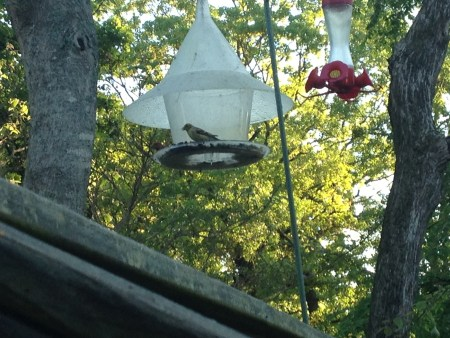 bird and hummingbird feeders on back deck