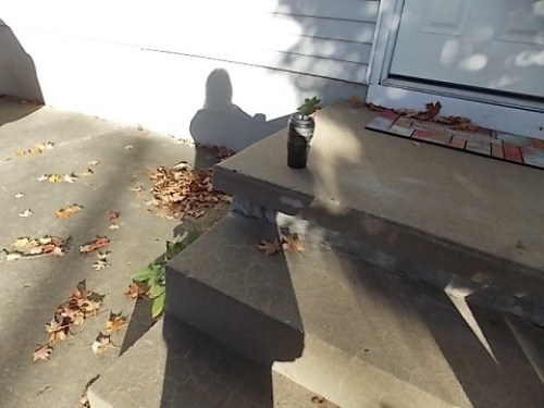 coffee on back steps