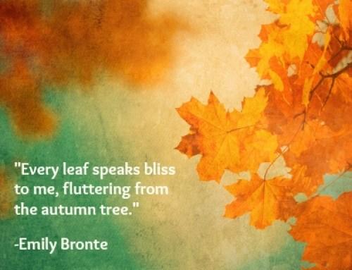 Leaf bliss