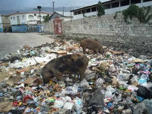 Pigs in Haiti trash Image source: http://www.bryankrahn.com/wp-content/uploads/2016/03/haiti-pigs-1024x768.jpg