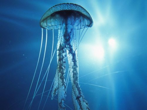 jellyfish Image source: Pinterest-gacpr.com