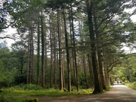 trees in Killarney National Park