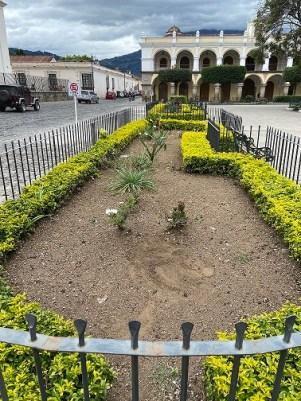 flower garden, Parque Central