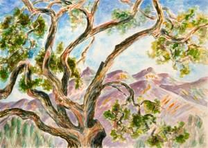 watercolor: Ancient Oak, Ojai, CA