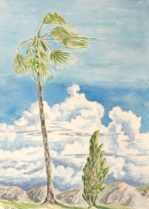 watercolor: Old Palm, Venice, CA