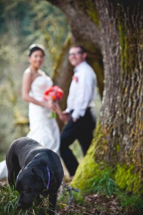 Allyssa + Joe   Mt. Angel Wedding