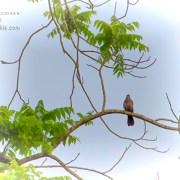 Bird in a Tree by Beth Sawickie www.bethsawickie.com/bird-in-a-tree