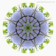 Green Leaves Mandala 2 by Beth Sawickie