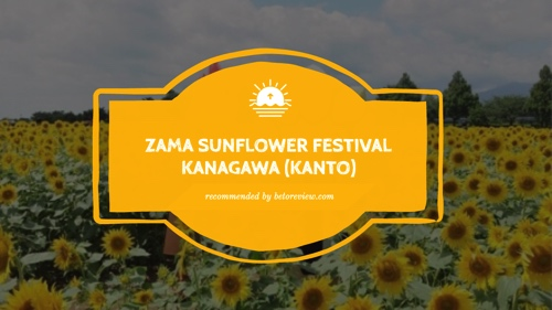 zama sunflower festival kanto copy