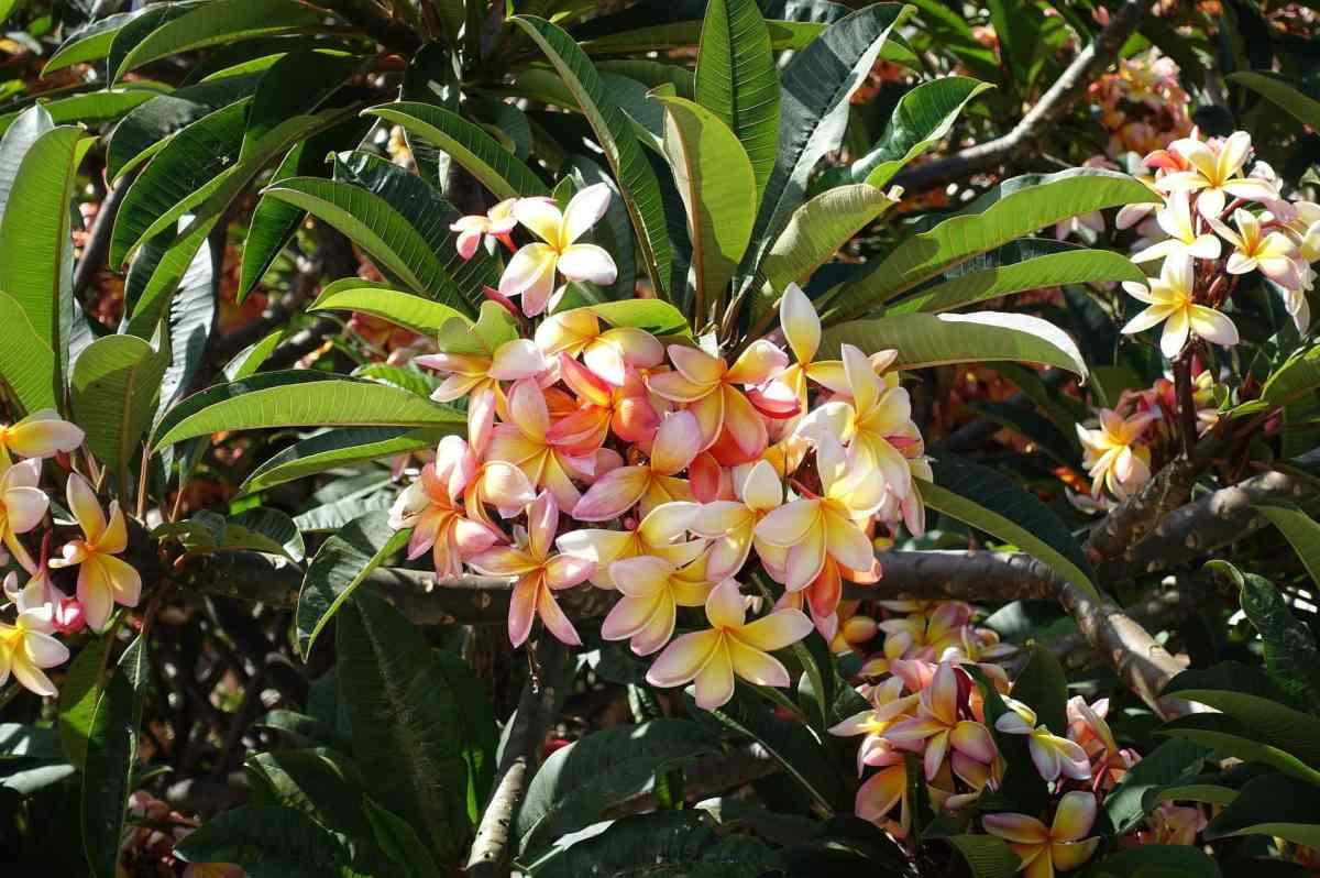 Madeiras Blumenpracht
