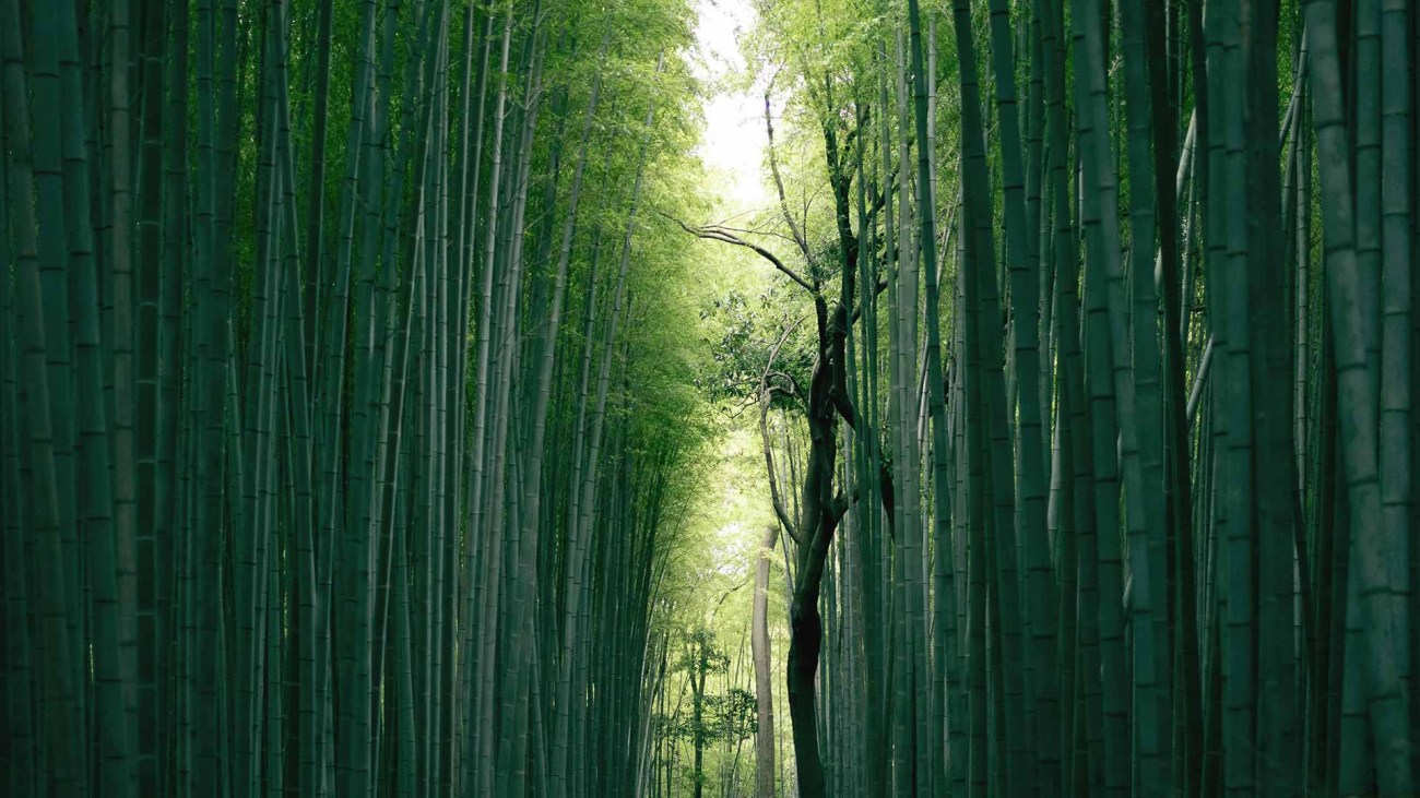 Bambuswald am Fushimi Inari Taisha