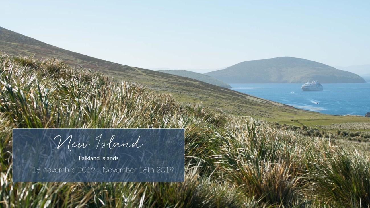 Erster Stop. New Island. Falklandinseln