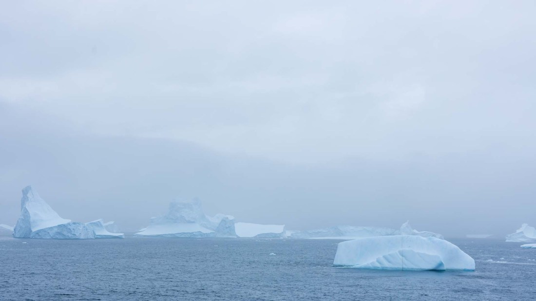 Eisberge, Royal Bay, Südgeorgien