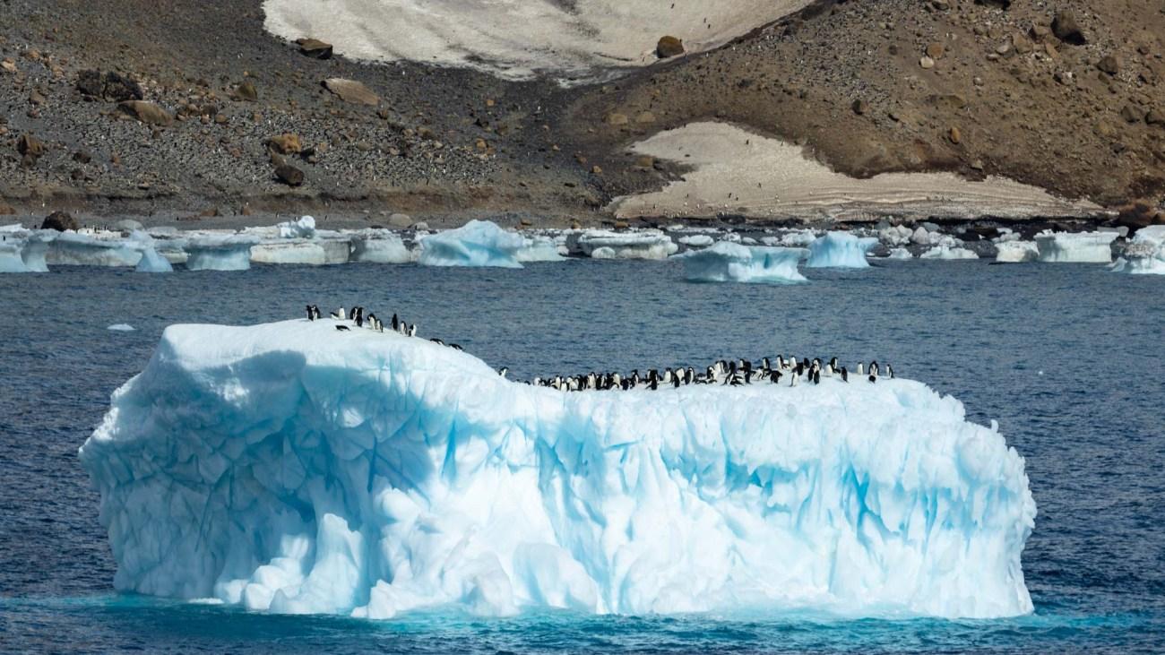 Pinguinkolonie, Brown Bluff, Antarktis