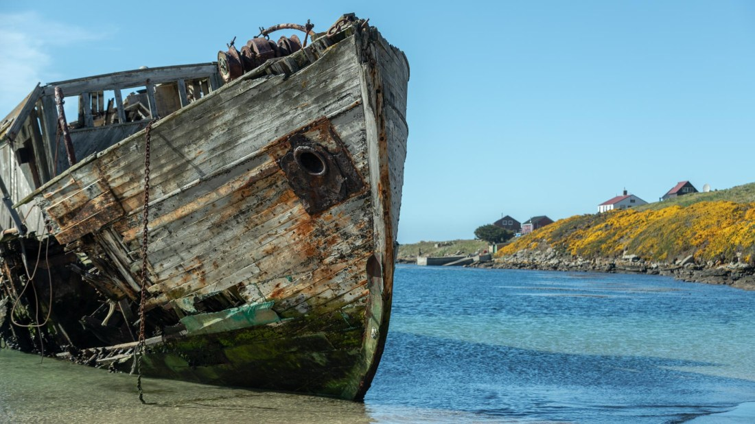 New Island, Falkland Inseln