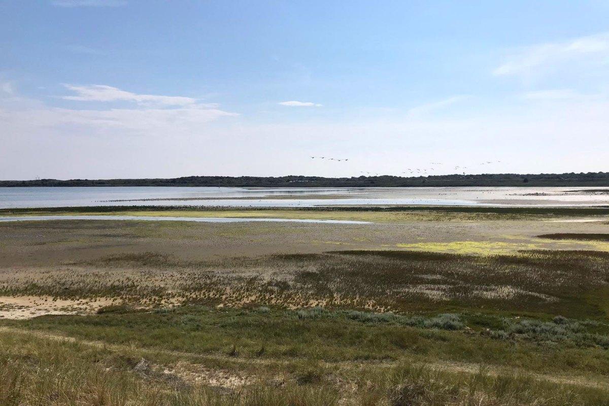Wattenmeer bei Texel