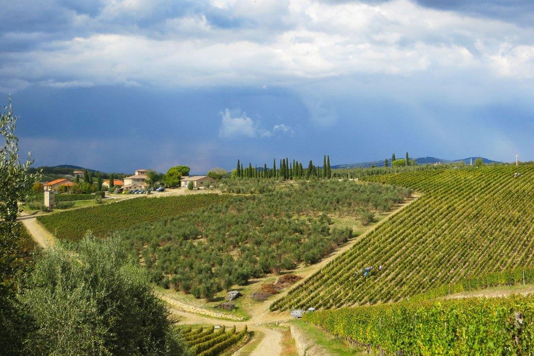 Weinberge in der Region Toskana