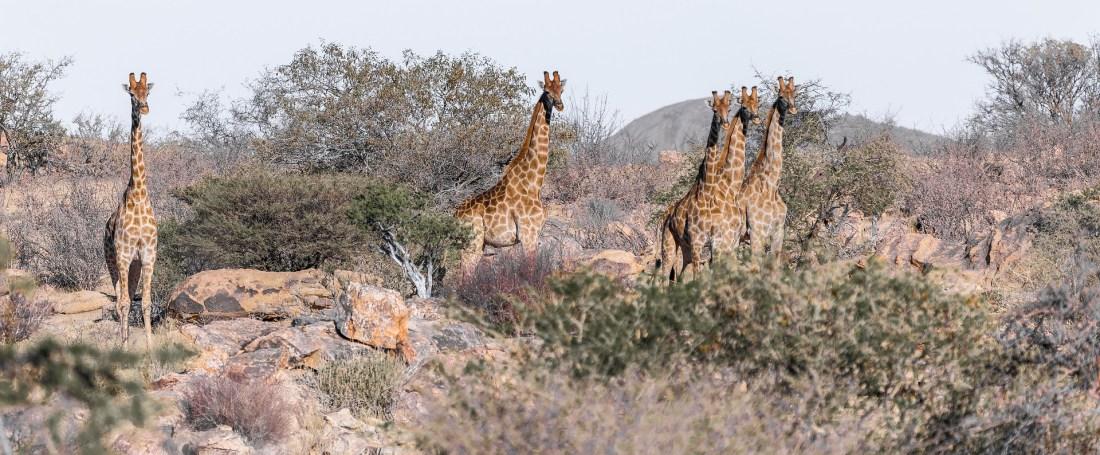 Tierische Vielfalt in Namibia