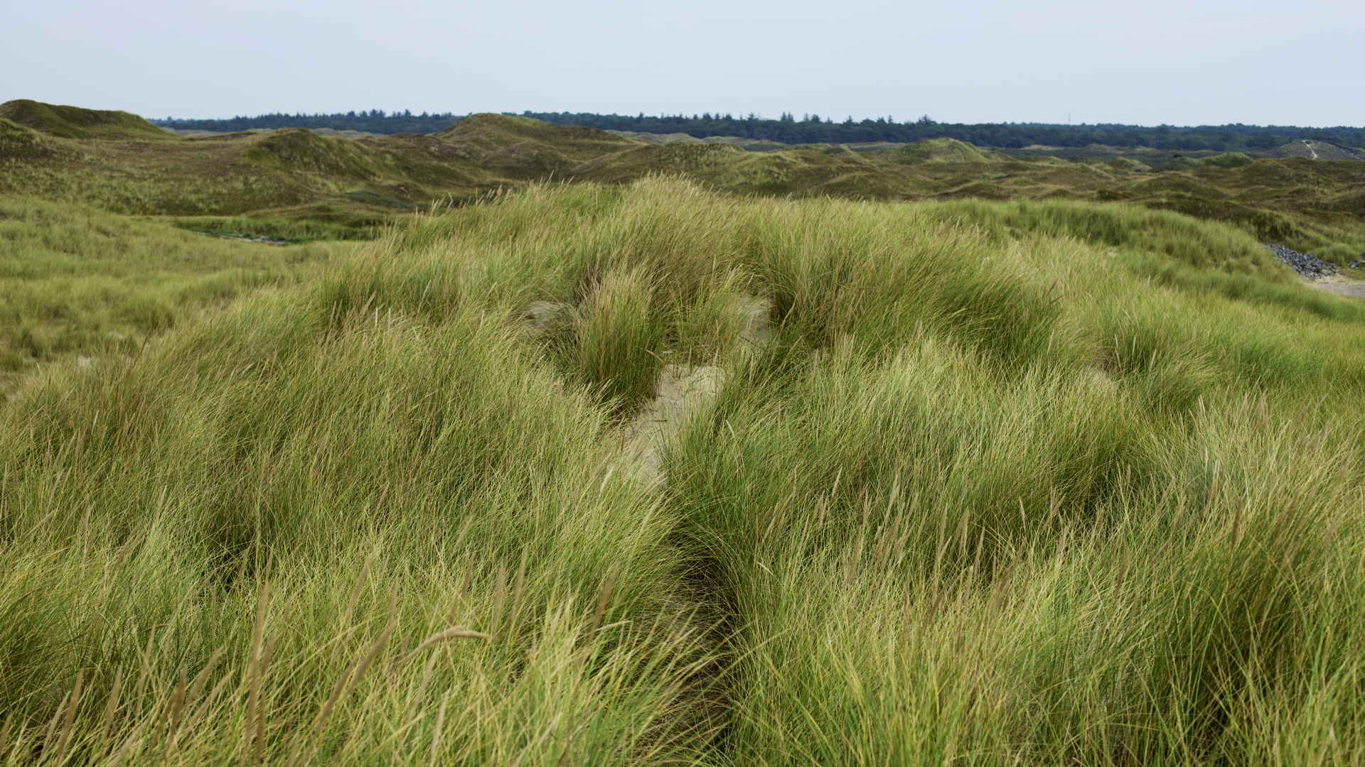 Texel, Strandbad, Dünen