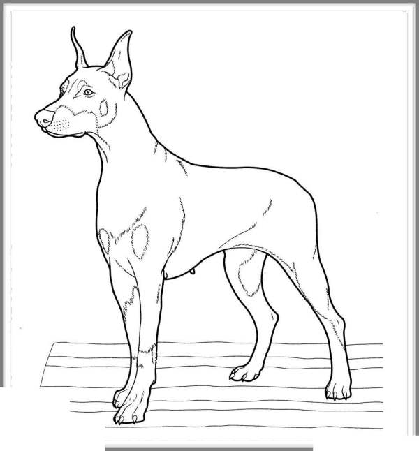 dachshund coloring pages # 27