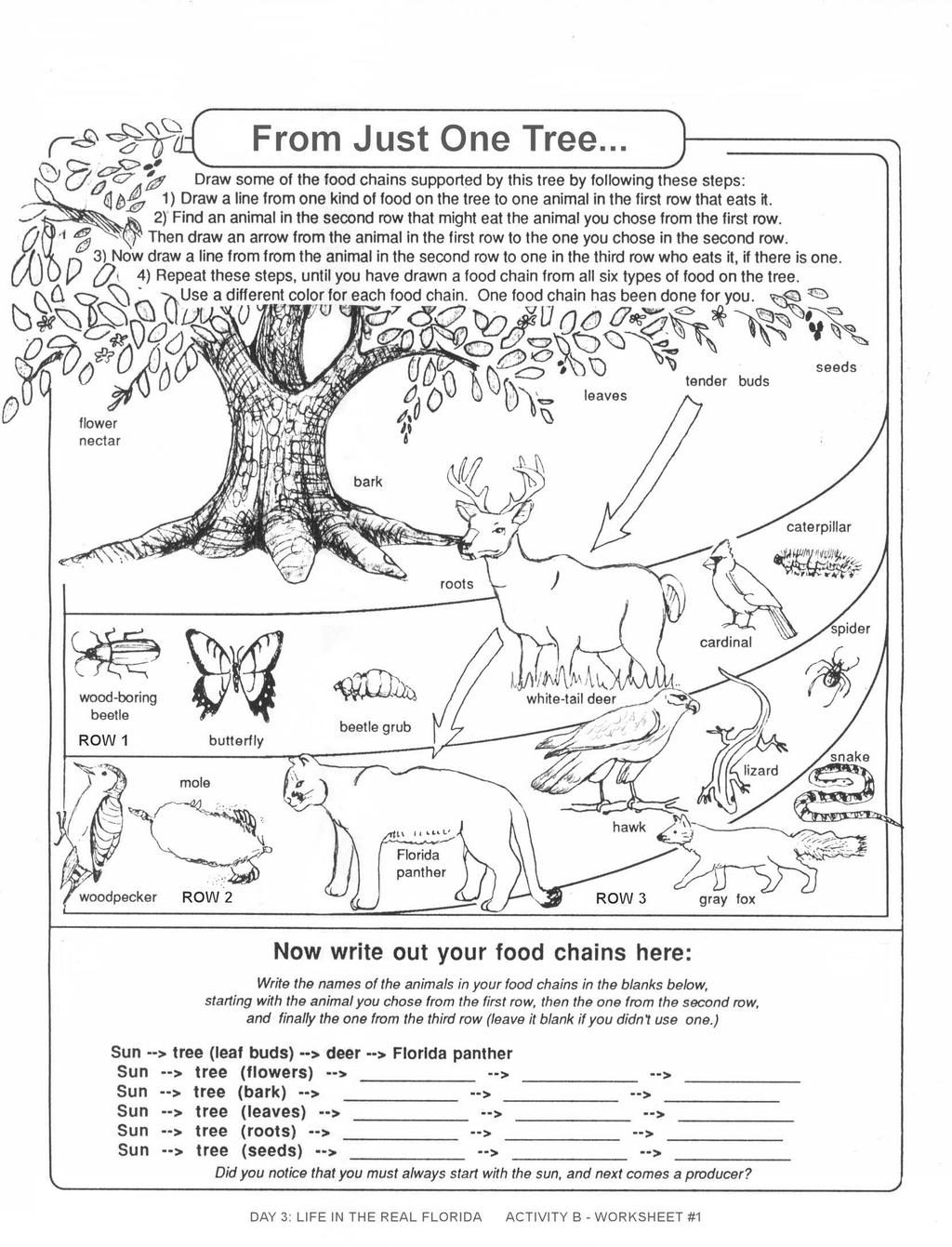 Food Chain Printable That Are Genius