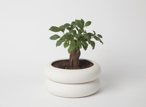 Power Planter Short by Chen Chen & Kai Williams
