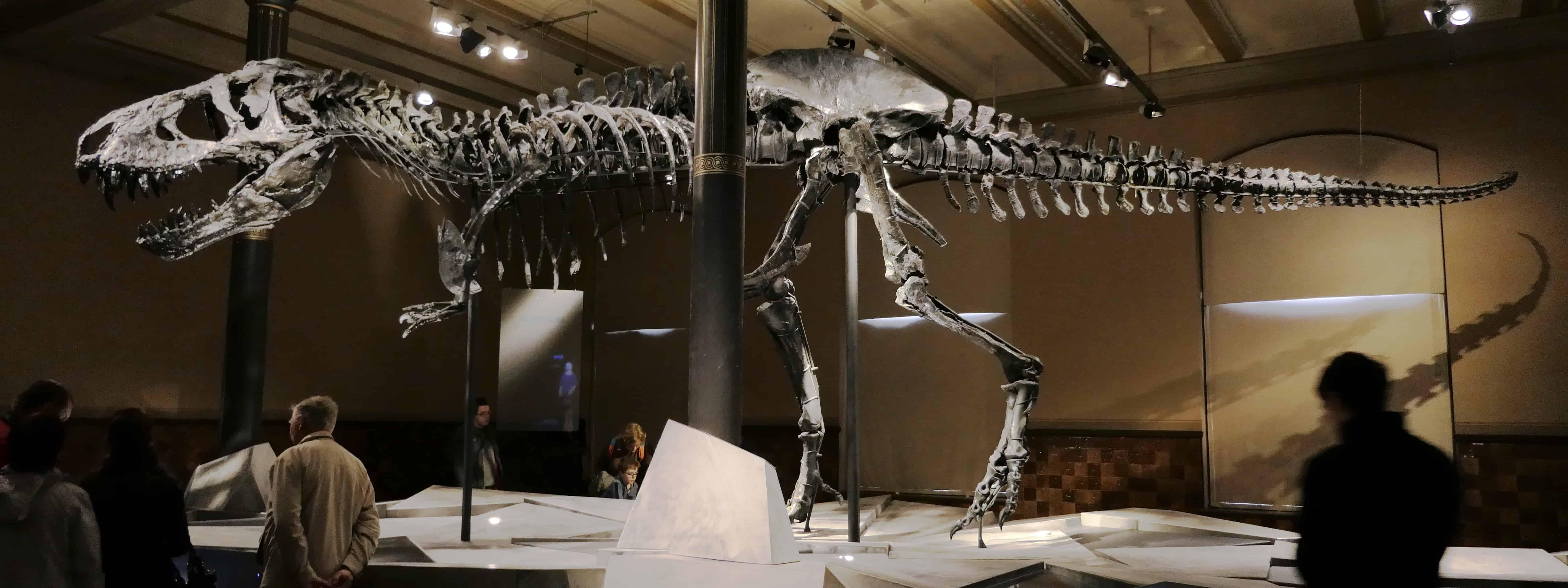T-Rex Museum für Naturkunde Berlin