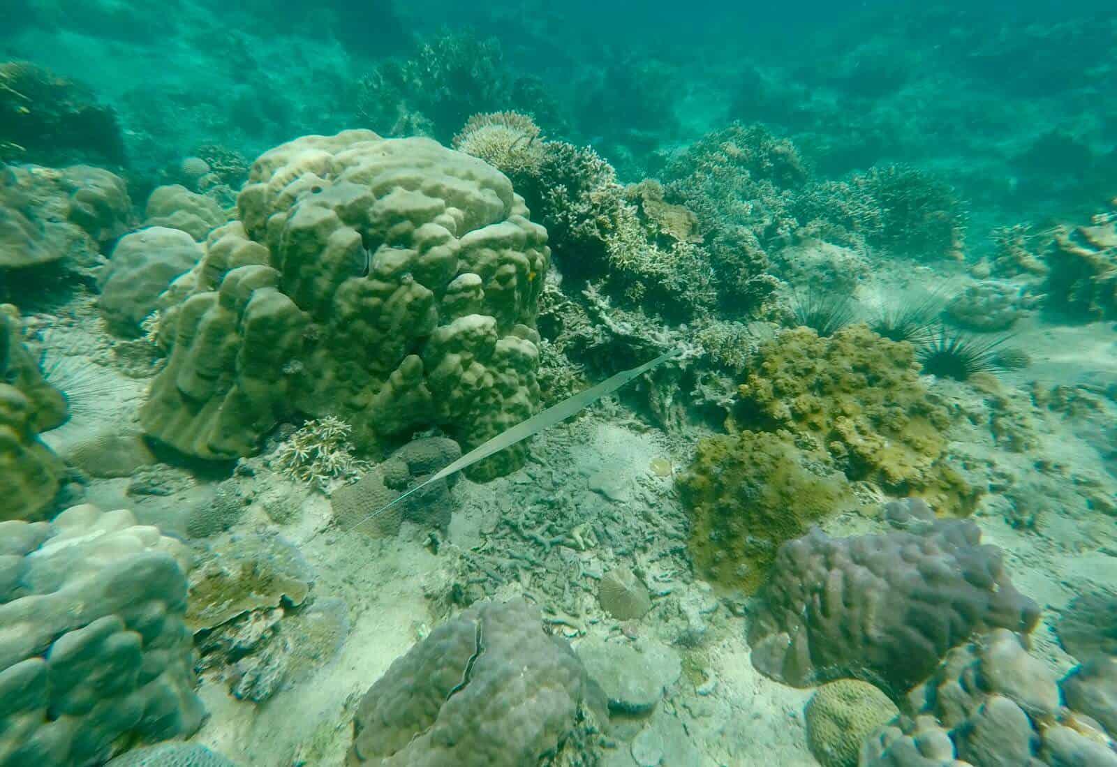Nha Trang Vietnam snorkelling underwater go pro hero 5 coral fish