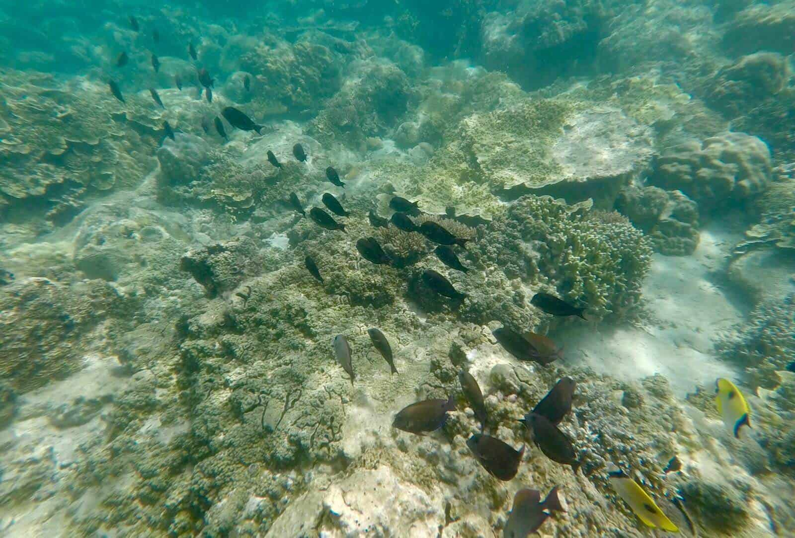 Plenty of Fish Bha Trang Vietnam Snorkelling underwater gopro hero 5 betternotstop
