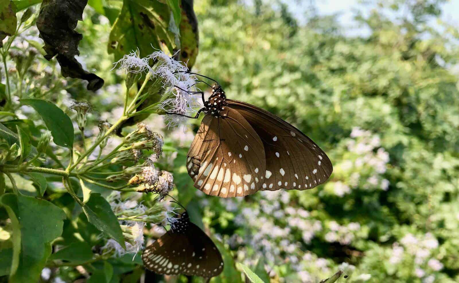 betternotstop nature India Odisha