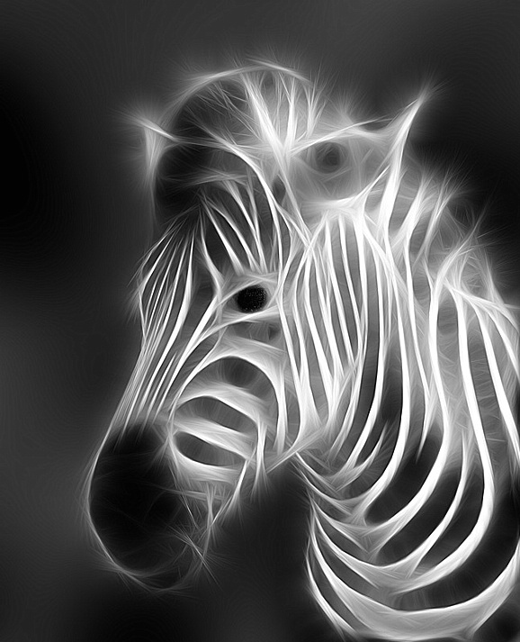 Keywords: zebra, x-ray, animal, black and white, fractalius, white, animals,