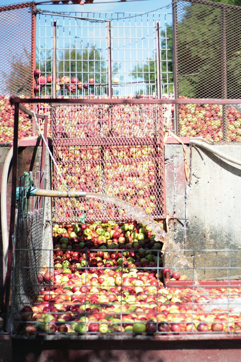 apple cider mill between two coasts