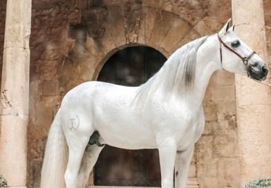 El Palau, plató fotogràfic per als millors cavalls del món