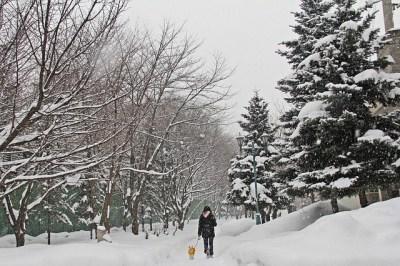 Sapporo bety kristianto