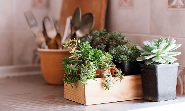 Are succulents your favorite houseplant? Tell us in the comments