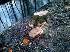 Gekapte bomen nabij Vosbergdam