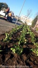 Nieuwe perkplanten Cannenburchstraat