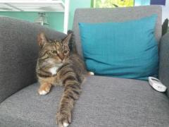 Kat, Izzy is weer thuis