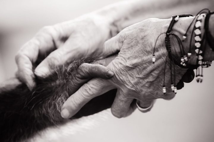 Chimpanzee Sanctuary - Uganda