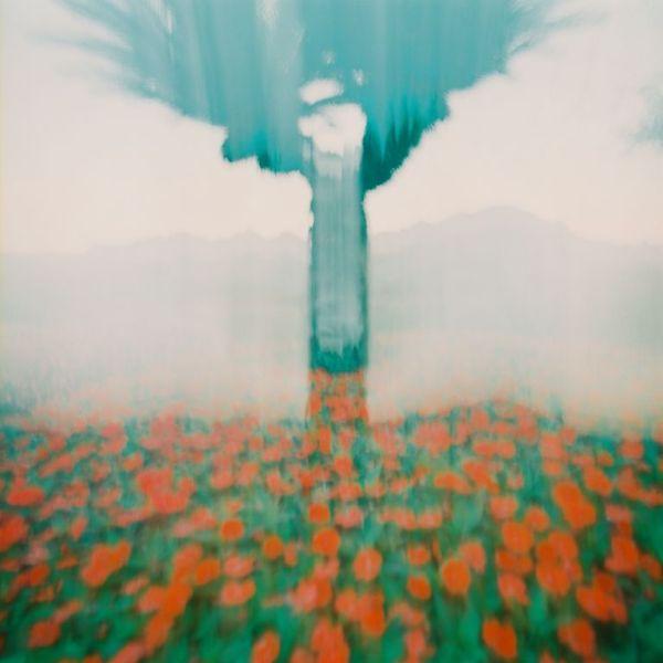 Lamiel Penot photographie fleur