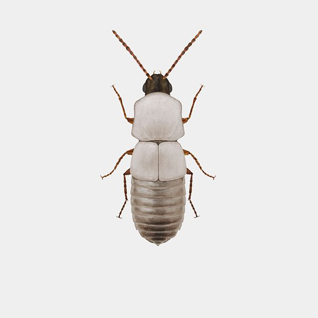 Les insectes de Richard Wilkinson, entre hyper-réalisme et sciences-fiction